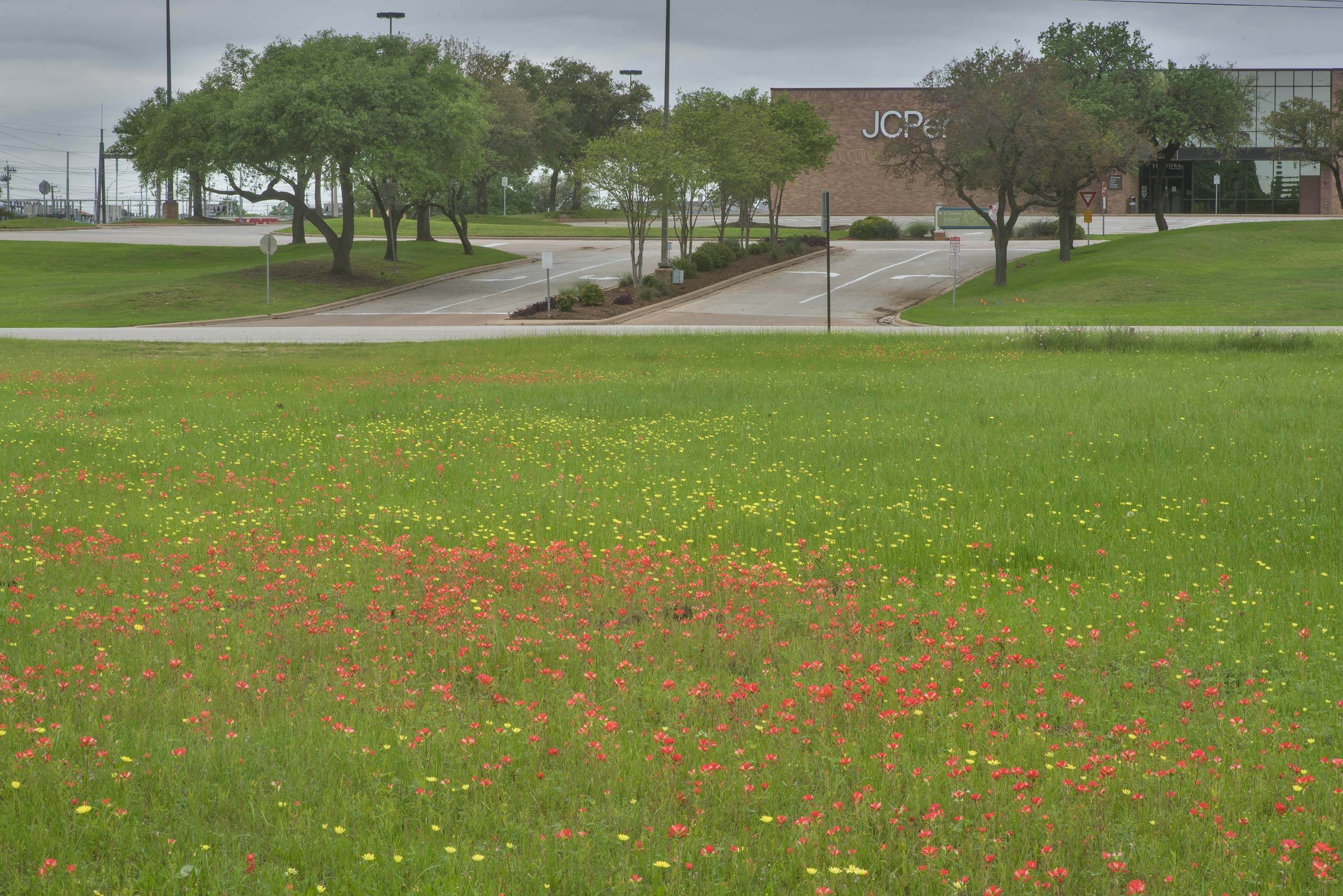 View of wildflowers and a shopping mall in Wolf Pen Creek Park. College Station, Texas