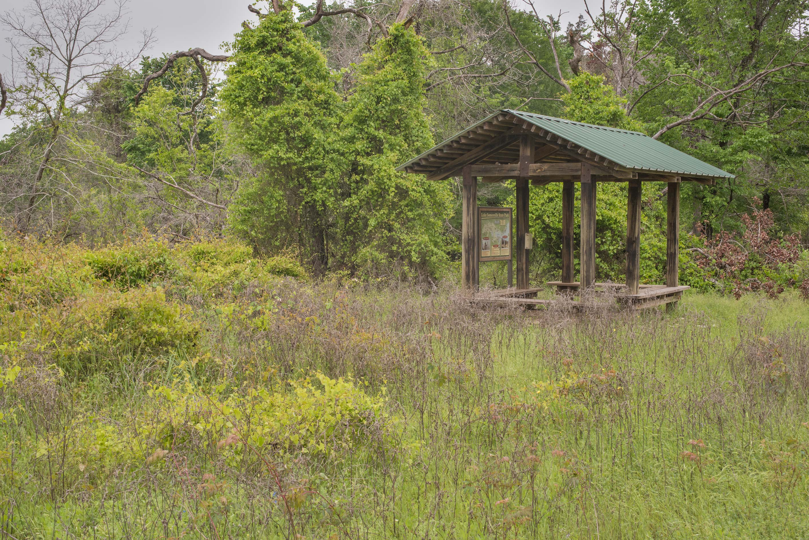 Overgrown pavilion at Lake Somerville Trailway...of Somerville Lake State Park. Texas