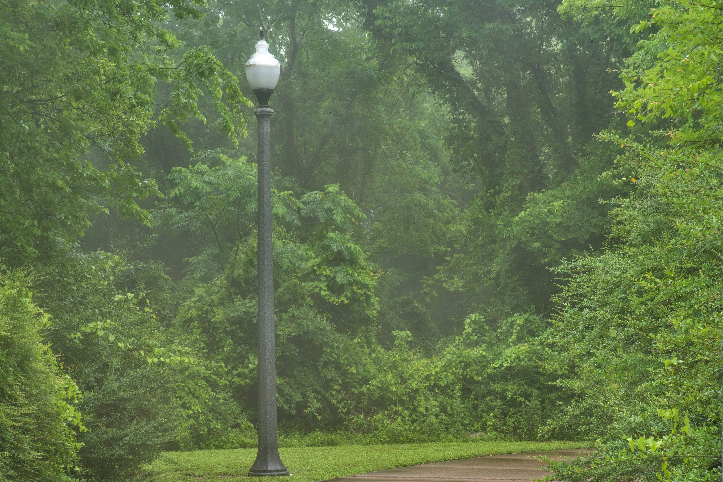 Lamppost in mist in Wolf Pen Creek Park. College Station, Texas