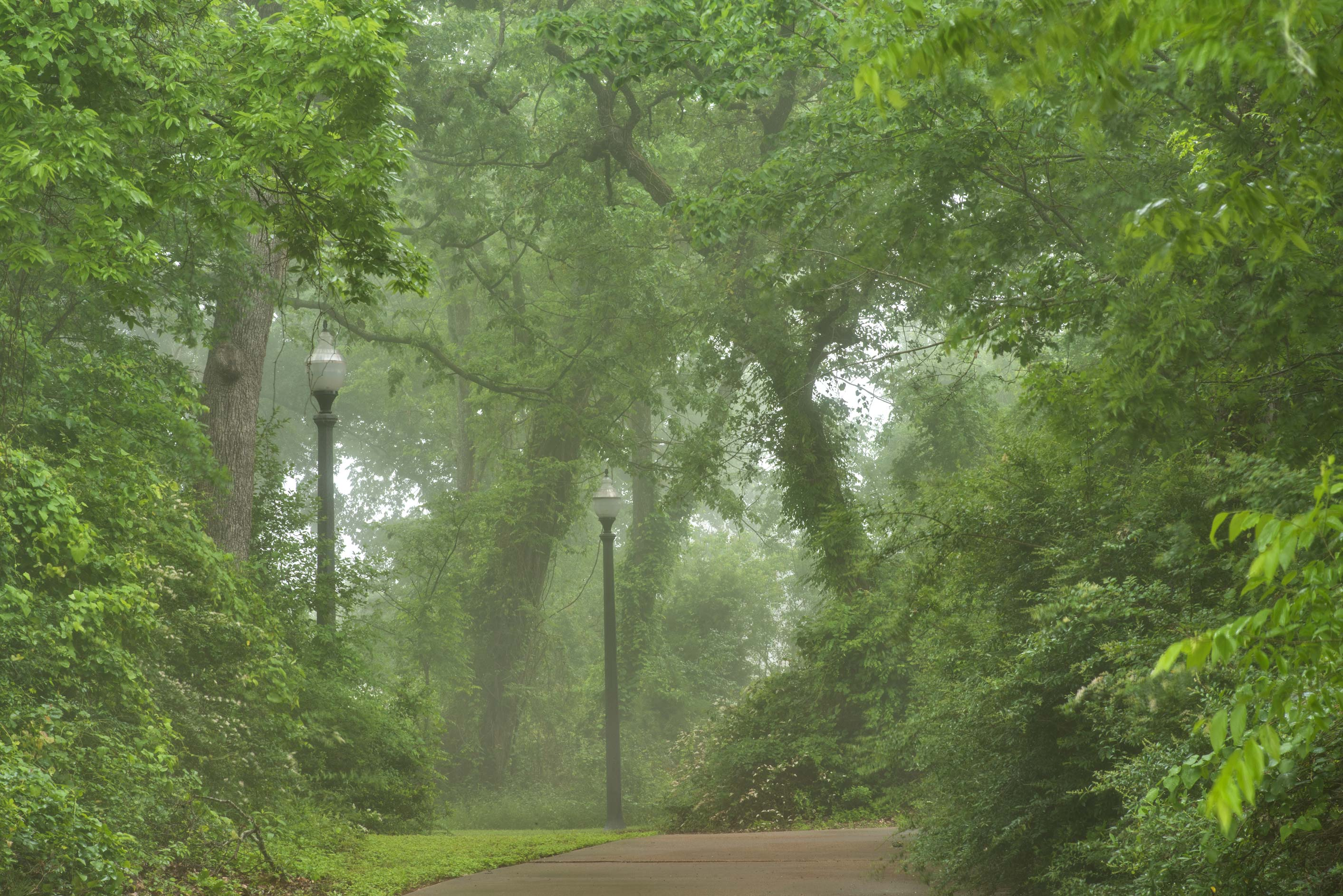 Path in mist in Wolf Pen Creek Park. College Station, Texas