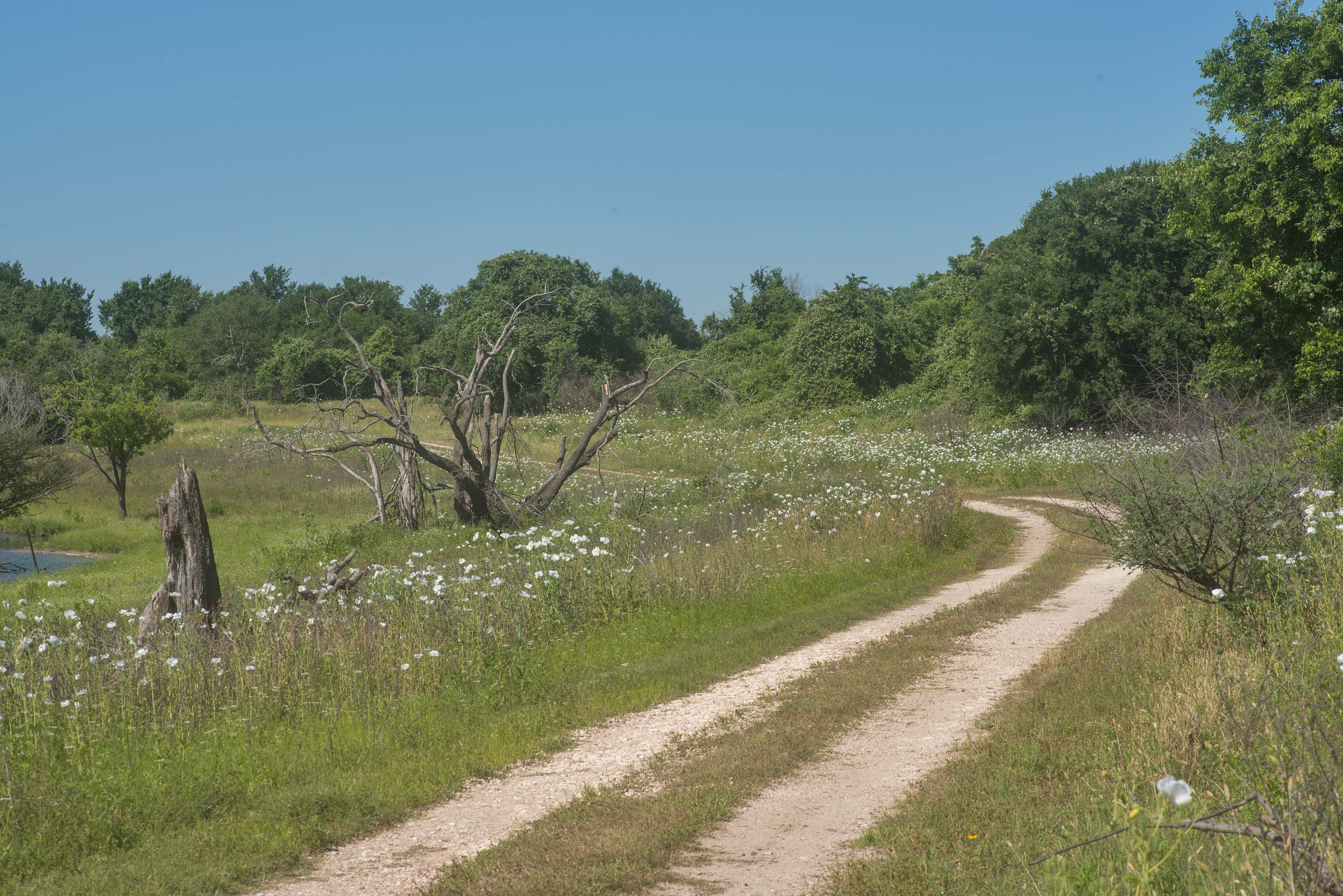 Road near Flag Pond on Lake Somerville Trailway...of Somerville Lake State Park. Texas