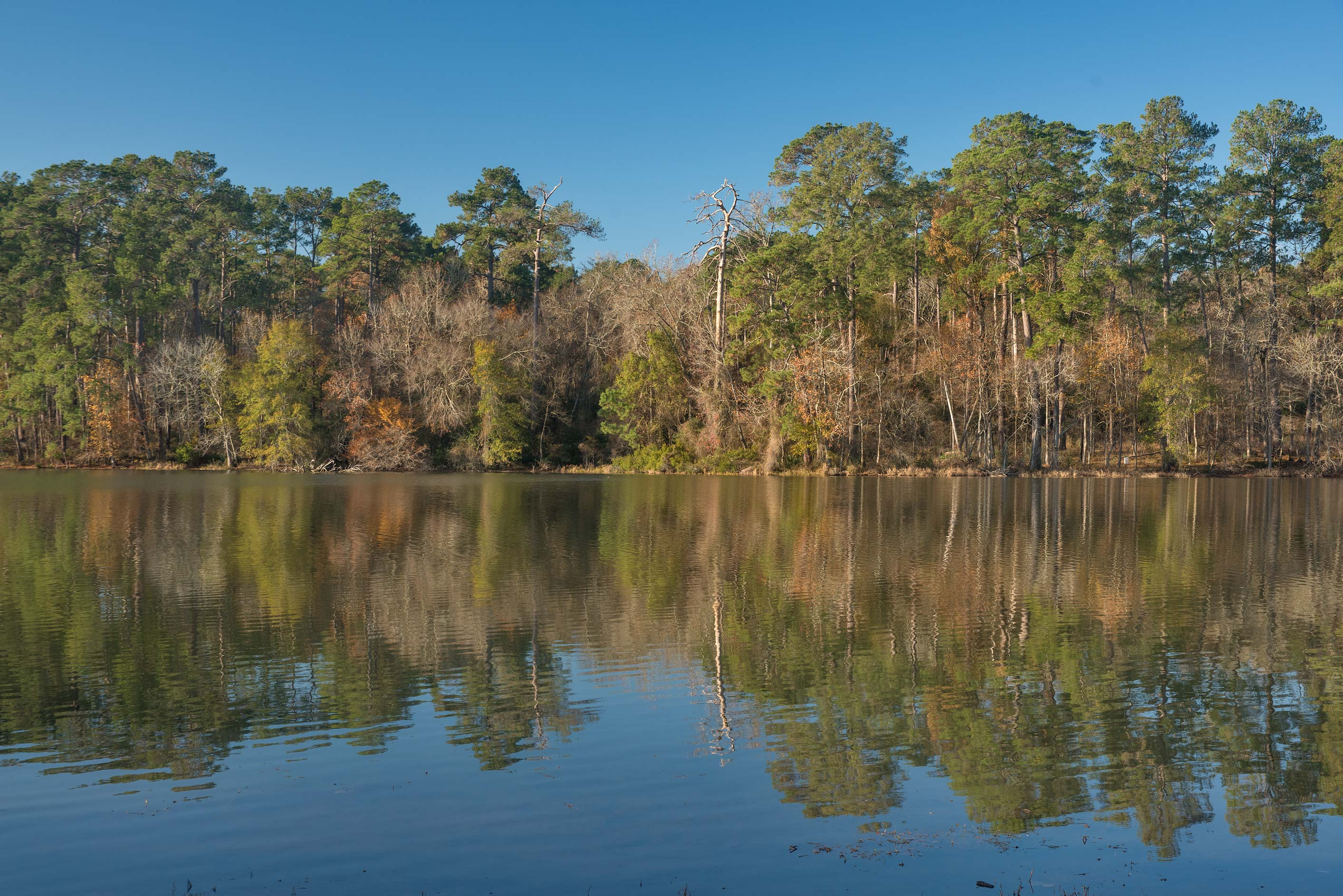 Lake Raven from southern end of PR 40 in Huntsville State Park. Texas