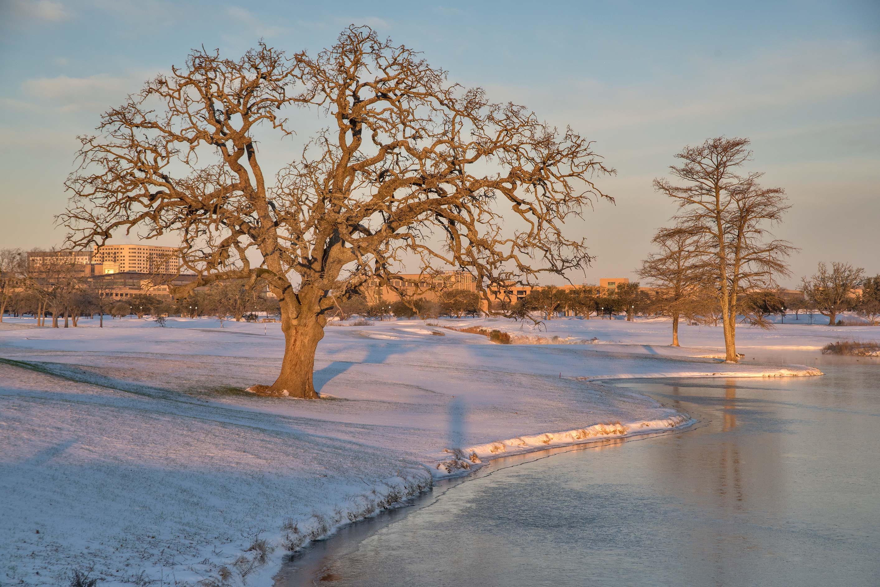Oak tree near a pond at sunrise on a golf course...M University. College Station, Texas