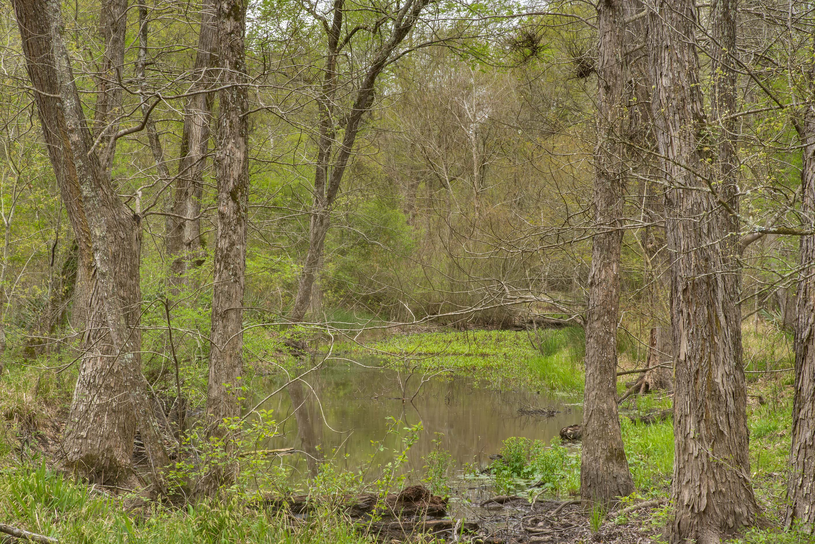 An oxbow at Raccoon Run Trail in Lick Creek Park. College Station, Texas