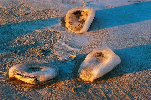 how to clean quahog shells