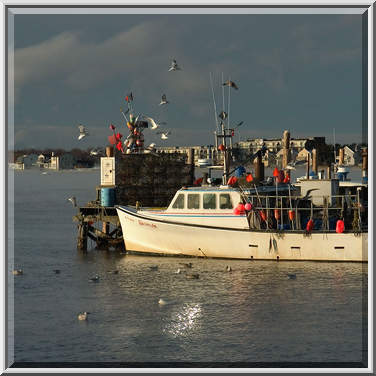 Photo 433 07 a fishing boat and gulls view from long for Fishing newport ri