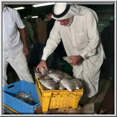 Photo 916 03 shopping for fish in central fish market for Central fish market