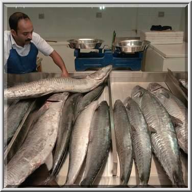 Photo 922 22 seller moving king fish mackerel to a for King fish market