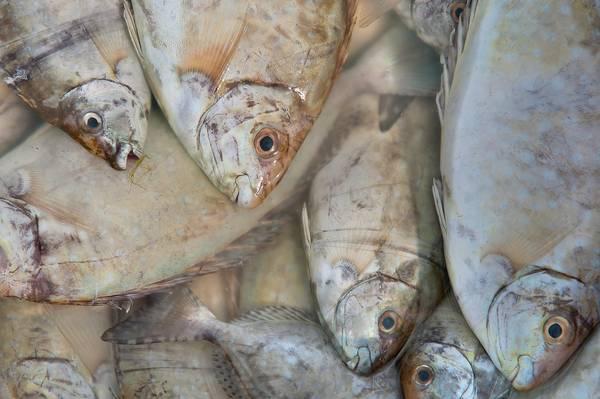 Slideshow 1002 15 fishes in fish market al wakrah qatar for 95 9 the fish