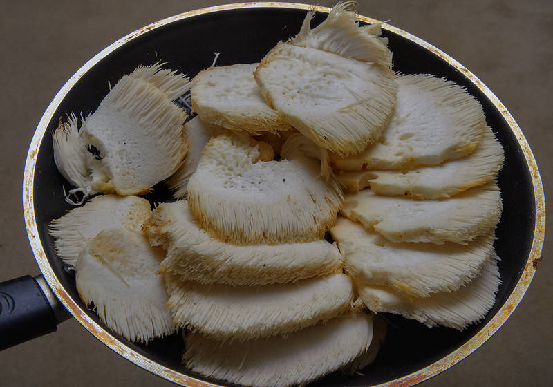 "Cooked <B>Hericium erinaceus</B> (Lion's Mane Mushroom, Bearded Tooth Mushroom) taken from a tree in Huntsville Park. Texas, <A HREF=""../date-en/2013-12-28.htm"">December 28, 2013</A>"