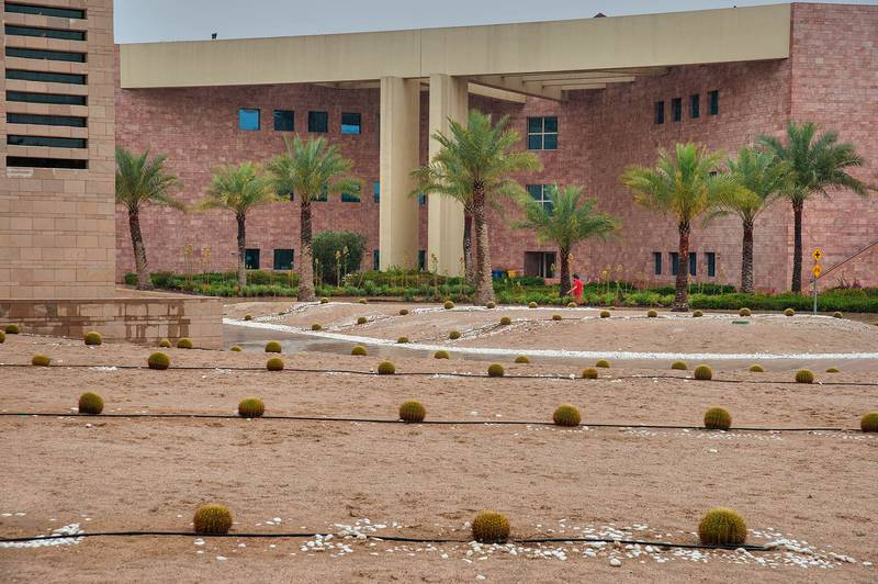 Golden Barrel Cactus (Echinocactus grusonii) on a lawn near back entrance of Texas A and M University in Education City campus. Doha, Qatar, March 26, 2014