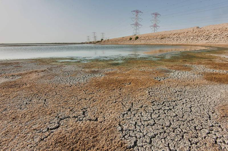 Dried aquatic plants of brittle naiad (Najas marina) in caked mud of Abu Nakhla jail ponds (sewage lagoons). Qatar, April 18, 2015