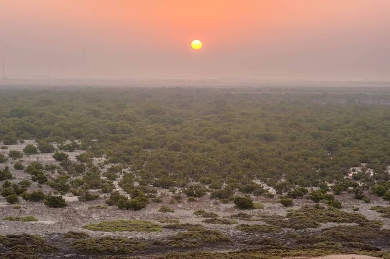 Mangrove forest (Avicennia marina) in salt marshes, view to the south from a hill on Purple Island (Jazirat Bin Ghanim). Al Khor, Qatar, December 20, 2015
