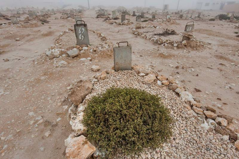 Compact plant of Tetraena qatarense (Zygophyllum qatarense) on a tomb of Al Khor Cemetery in mist. North from Al Khor, Qatar, February 6, 2016