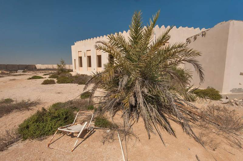 Date palms (Phoenix dactylifera, local name nakeel) in an abandoned garden in area of Ras Laffan farms. North-eastern Qatar, February 19, 2016