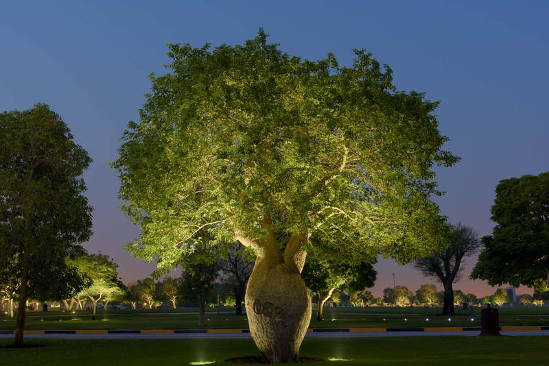 Silk floss tree (Chorisia speciosa, Ceiba speciosa, baobab family) in Aspire Park at dusk. Doha, Qatar, June 27, 2016