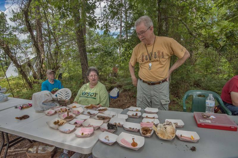 Analysis of collected mushrooms at mushroom walk with Gulf States Mycological Society in Watson Rare Native Plant Preserve. Warren, Texas, June 23, 2018
