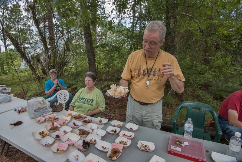 Demonstrating death cap mushrooms by President of Gulf States Mycological Society David Lewis in Watson Rare Native Plant Preserve. Warren, Texas, June 23, 2018