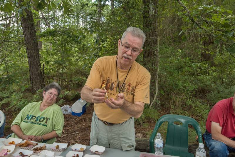 "Examining yellow-dust Amanita mushroom (<B>Amanita flavoconia</B>) by President of Gulf States Mycological Society David Lewis in Watson Rare Native Plant Preserve. Warren, Texas, <A HREF=""../date-en/2018-06-23.htm"">June 23, 2018</A>"