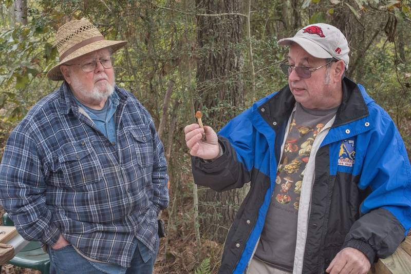 Jay Justice showing a small Amanita mushroom after the walk of Gulf States Mycological Society in Watson Rare Native Plant Preserve. Warren, Texas, November 10, 2018