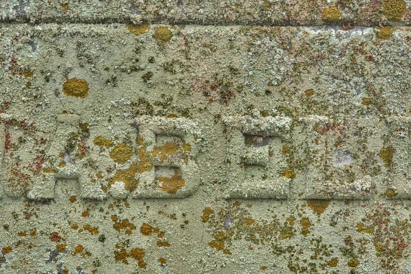 "<B>Xanthoparmelia conspersa</B> and Caloplaca lichens on a tomb in City Cemetery. Bryan, Texas, <A HREF=""../date-en/2019-01-03.htm"">January 3, 2019</A>"