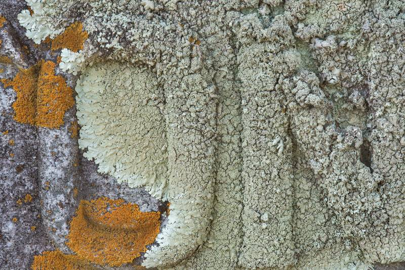 Close up of rock shield lichen (Xanthoparmelia) on a granite tombstone in old Port Sullivan cemetery, west from Hearne. Texas, January 8, 2019