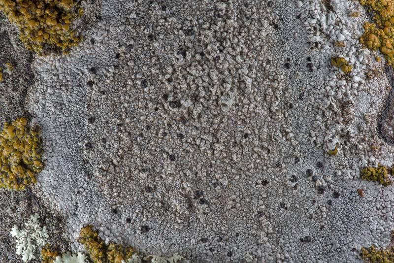 Some grey lichen on a granite tombstone in City Cemetery. Bryan, Texas, March 3, 2019