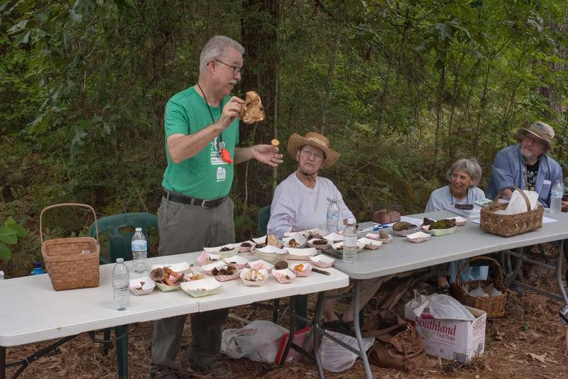 Demonstrating a large bitter bolete mushroom (Tylopilus) after a mushroom walk in Watson Rare Native Plant Preserve. Warren, Texas, June 22, 2019
