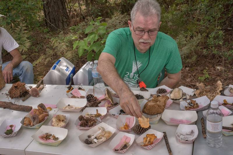 Sorting collected mushrooms at mushroom walk with Gulf States Mycological Society in Watson Rare Native Plant Preserve. Warren, Texas, June 22, 2019